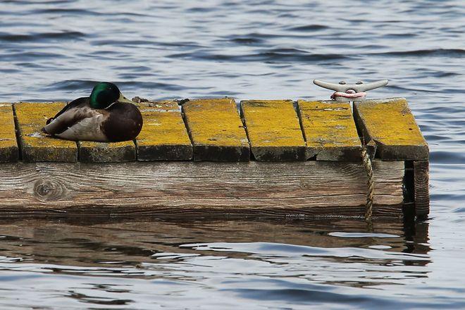 """Sittin' on the dock of the bay"" Brighton, Ontario Canada"