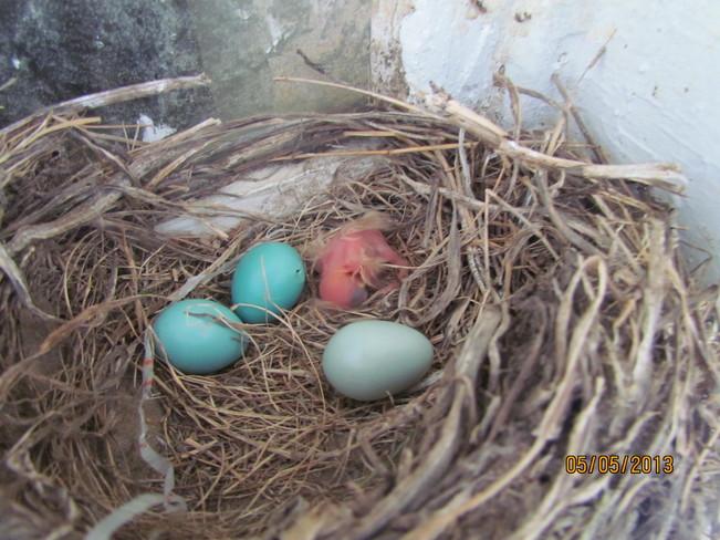 Spring Hatch