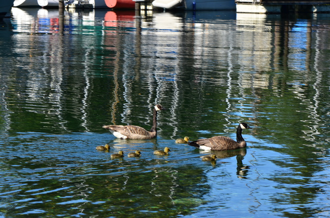 family day Bow Island, Alberta Canada