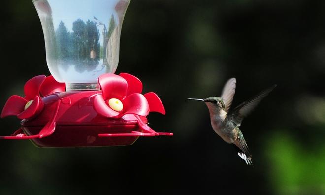 Hummingbird Cambridge, Ontario Canada