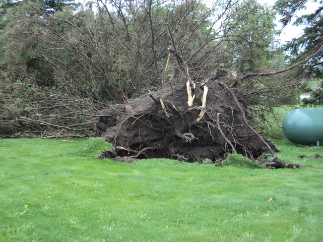Storm Damage in Dalston Dalston, Ontario Canada