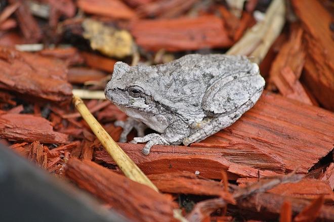 Cool looking Frog! Brandon, Manitoba Canada
