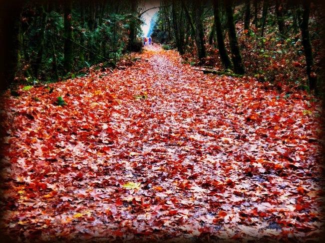 fall leaves 2012 in Goldstream Park Goldstream, British Columbia Canada