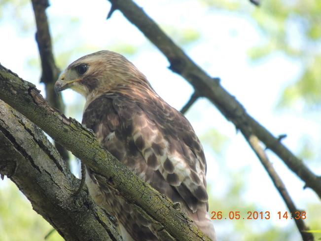 RBG BIRDS2 Hamilton, Ontario Canada