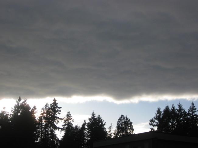 dark with a light, creamy centre Surrey, British Columbia Canada