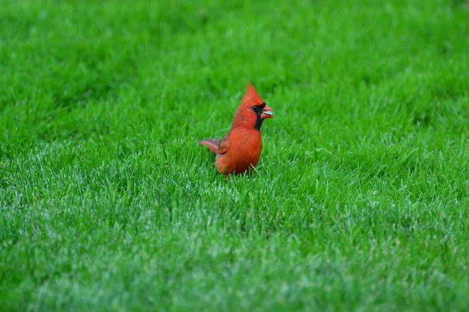 birds in my yard Brampton, Ontario Canada