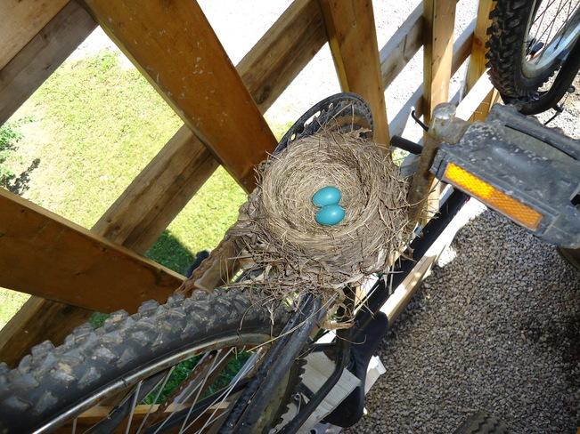 Robin's nest Merrickville-Wolford, Ontario Canada