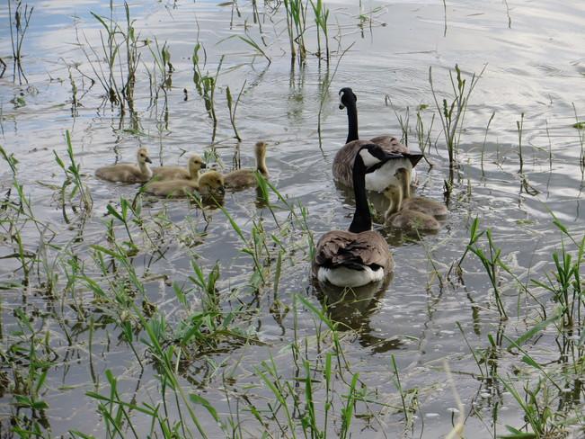 Large Family Brandon, Manitoba Canada