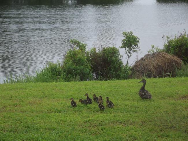 Mother with her 9 babies North Sydney, Nova Scotia Canada
