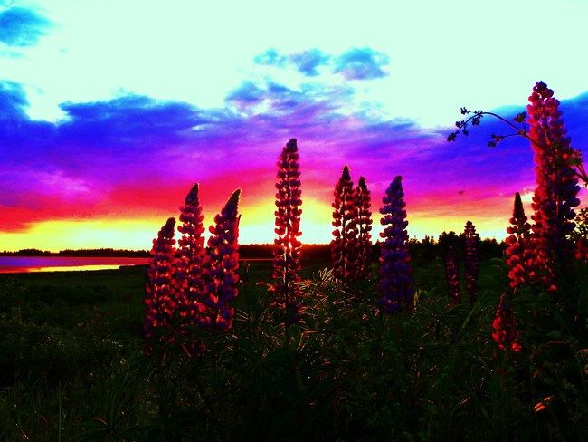 welcome summer Summerside, Prince Edward Island Canada