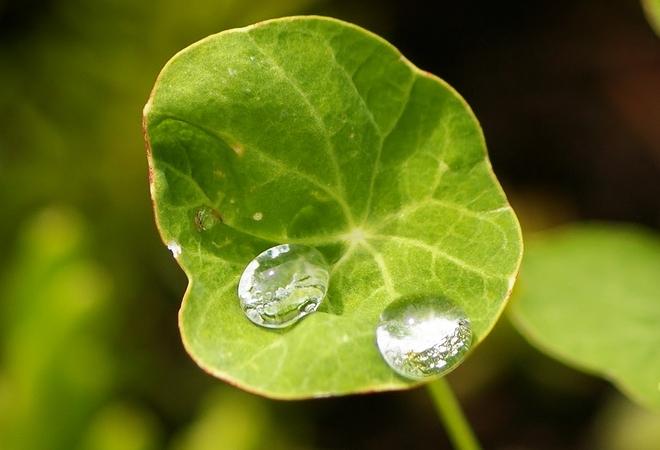 Photosynthesis Kelowna, British Columbia Canada