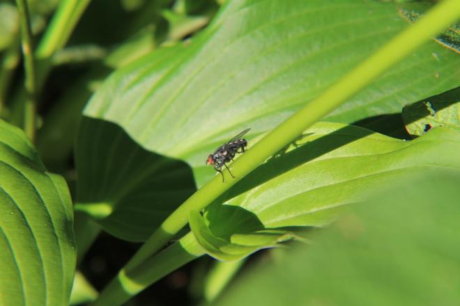 a fly Abbotsford, British Columbia Canada