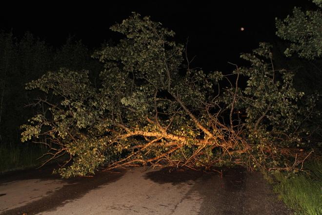 Fallen tree Edmonton, Alberta Canada