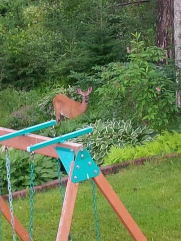 Taken from deck of backyard Lower Sackville, Nova Scotia Canada