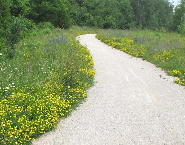 yellow edged pathway Guelph, Ontario Canada