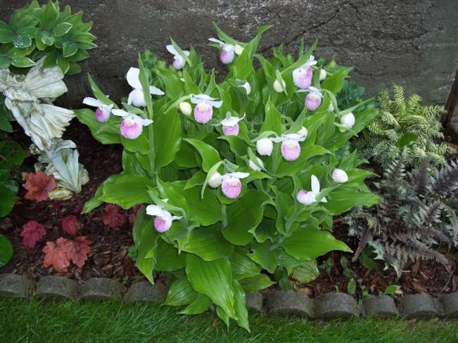 Wild Orchids Tiverton, Ontario Canada