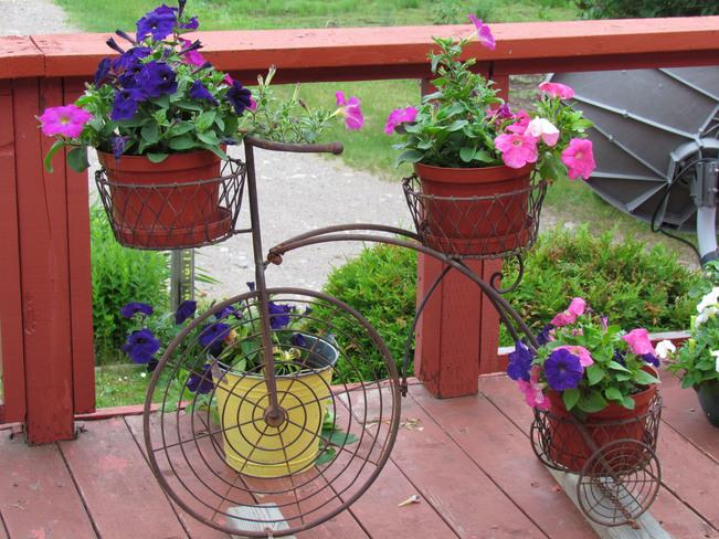 Blooming Tricycle Upsala, Ontario Canada