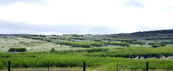 Wind and Rain Crop Damage
