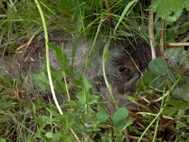 nestled in Seaforth, Ontario Canada