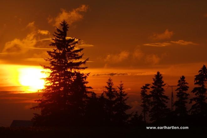 Burning Tree Port Dover, Ontario Canada