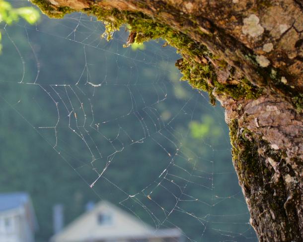 abandoned cobweb Abbotsford, British Columbia Canada