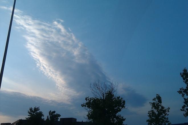 Huge bird in the sky! Winnipeg, Manitoba Canada