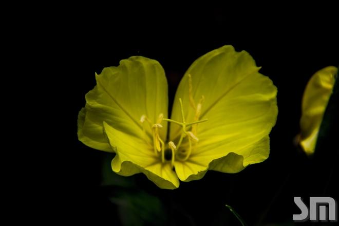 Flower Edmonton, Alberta Canada