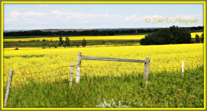 YELLOW Turner Valley, Alberta Canada