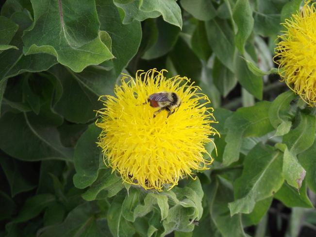 Busy as a Bee ! Sundre, Alberta Canada