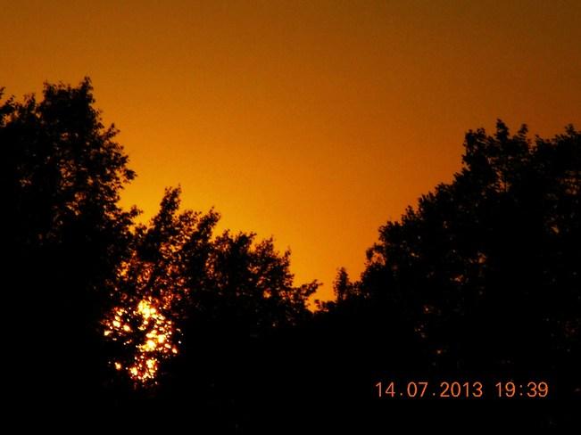 Sun going down through trees Salisbury, New Brunswick Canada
