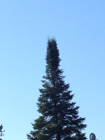 Maajestic tree top Gogama, Ontario Canada