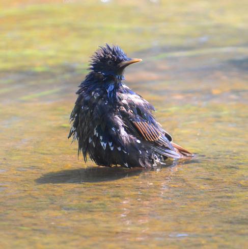 Bad Feather Day Scarborough, Ontario Canada