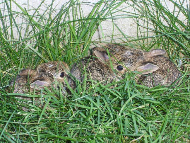 Bunnies!! Kitchener, Ontario Canada