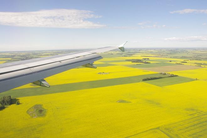 yellowfields! Edmonton, Alberta Canada