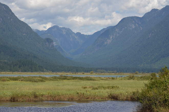 Beautiful Nature Pitt Meadows, British Columbia Canada