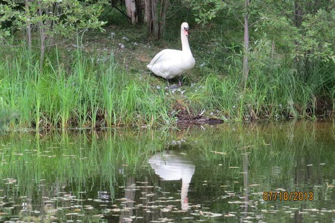 Nice reflection Timmins, Ontario Canada
