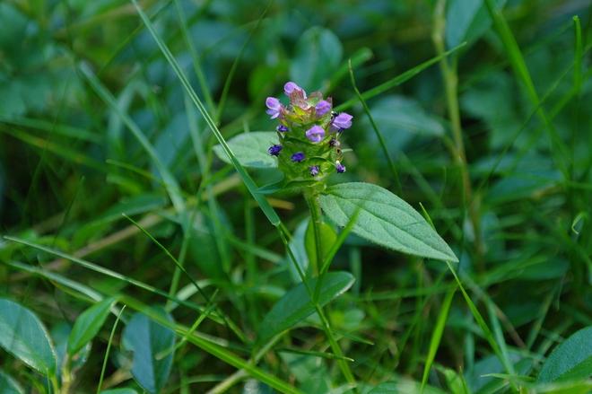 Tiny Flowers Surrey, British Columbia Canada