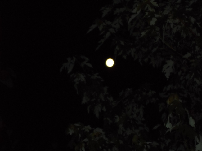 Full Moon between Trees Elliot Lake, Ontario Canada
