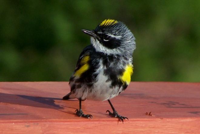 pretty bird Sackville, New Brunswick Canada