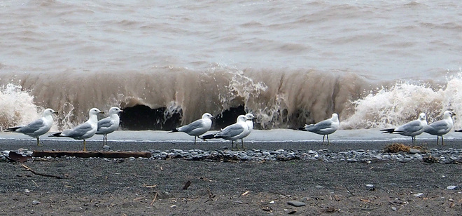 Gulls at Port Bruce London, Ontario Canada