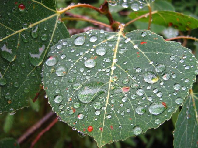 Raindrops Keep Fallin' ... Deer Lake, Newfoundland and Labrador Canada