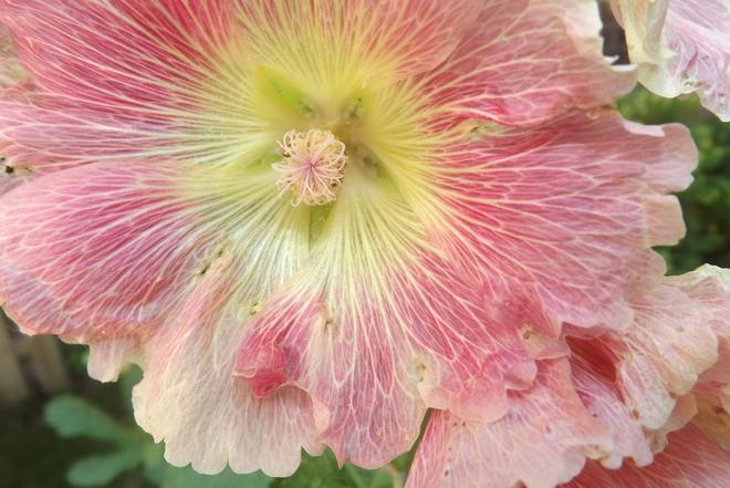 Flowers London, Ontario Canada
