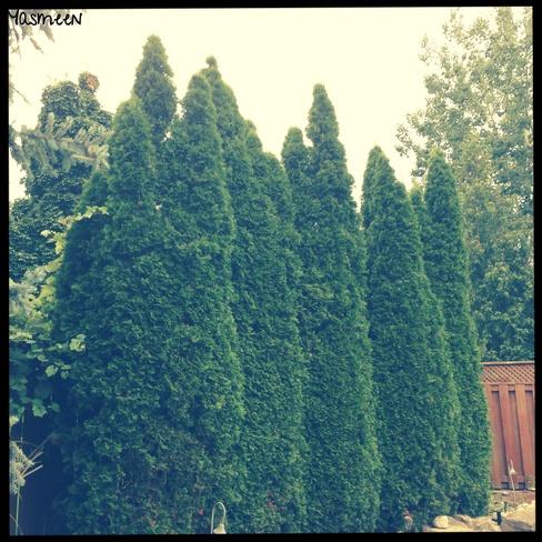 Family of Trees Mississauga, Ontario Canada