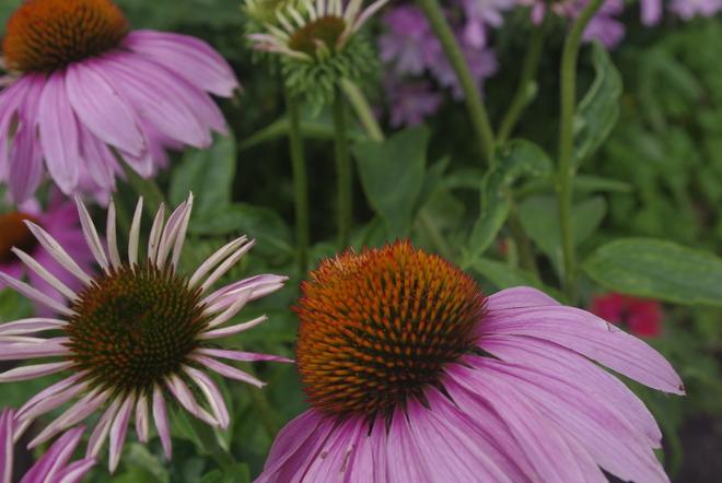 Flowers Montréal, Quebec Canada