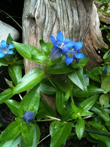 beautiful blue Burlington, Ontario Canada