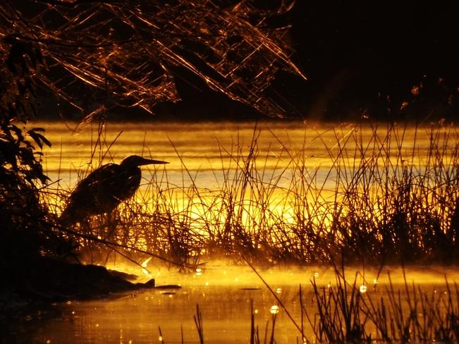 early morning hunter Madoc, Ontario Canada