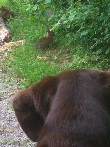 Bunny stalk Oakville, Ontario Canada