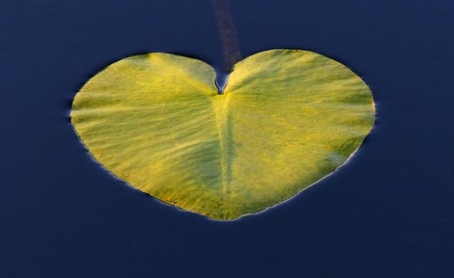 Sherriff Creek heart shaped pad. Elliot Lake, Ontario Canada