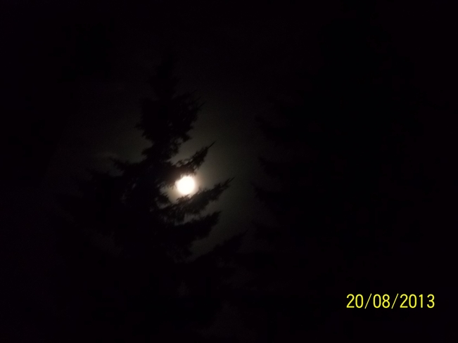 Blue moon thru the spruce tree