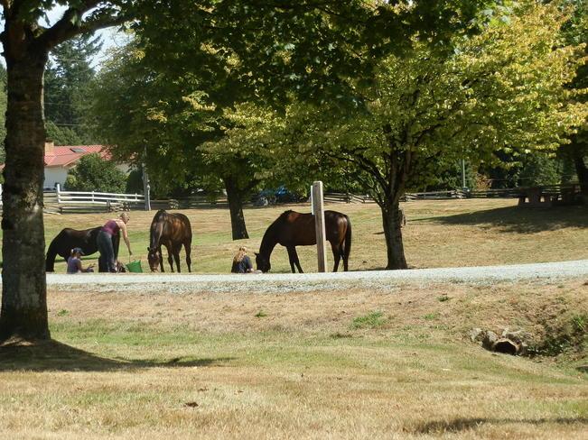 Girls and Horses Langley, British Columbia Canada